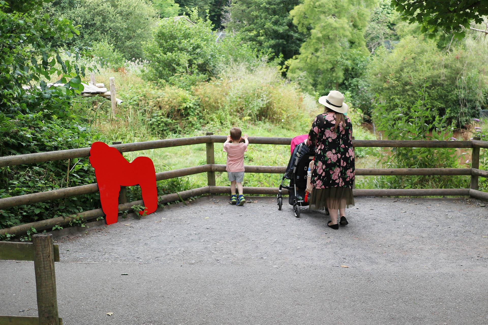Trip to Paignton Zoo